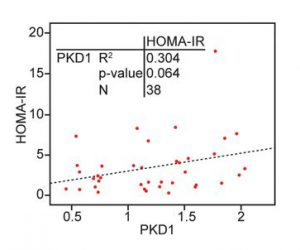 Correlation between PKD1 and HOMA‐IR