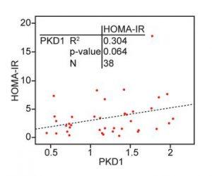 Correlation between PKD1 and HOMA‐IR