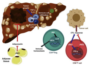 JNK control of tumor microenvironment